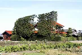 tsuijimatsu